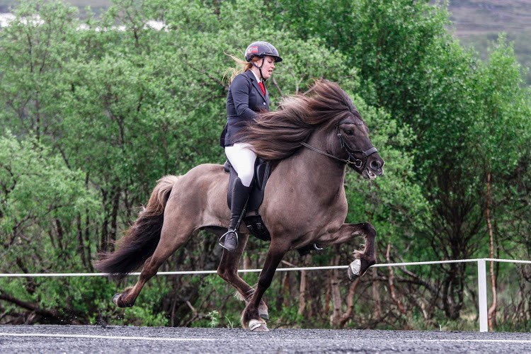Premieplukkar. Ingrid Sofie Krogsæter og Vigrid fekk prisen for «God og harmonisk riding» i helga. No lader dei opp til NM. (Foto, Gry Elisabeth Nedal)